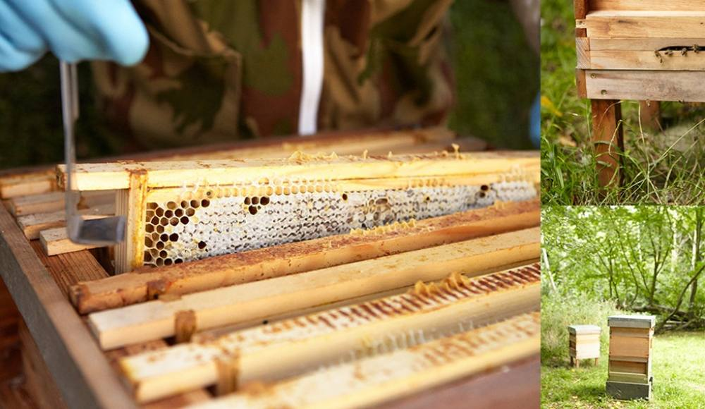 A great day with nature collecting honey